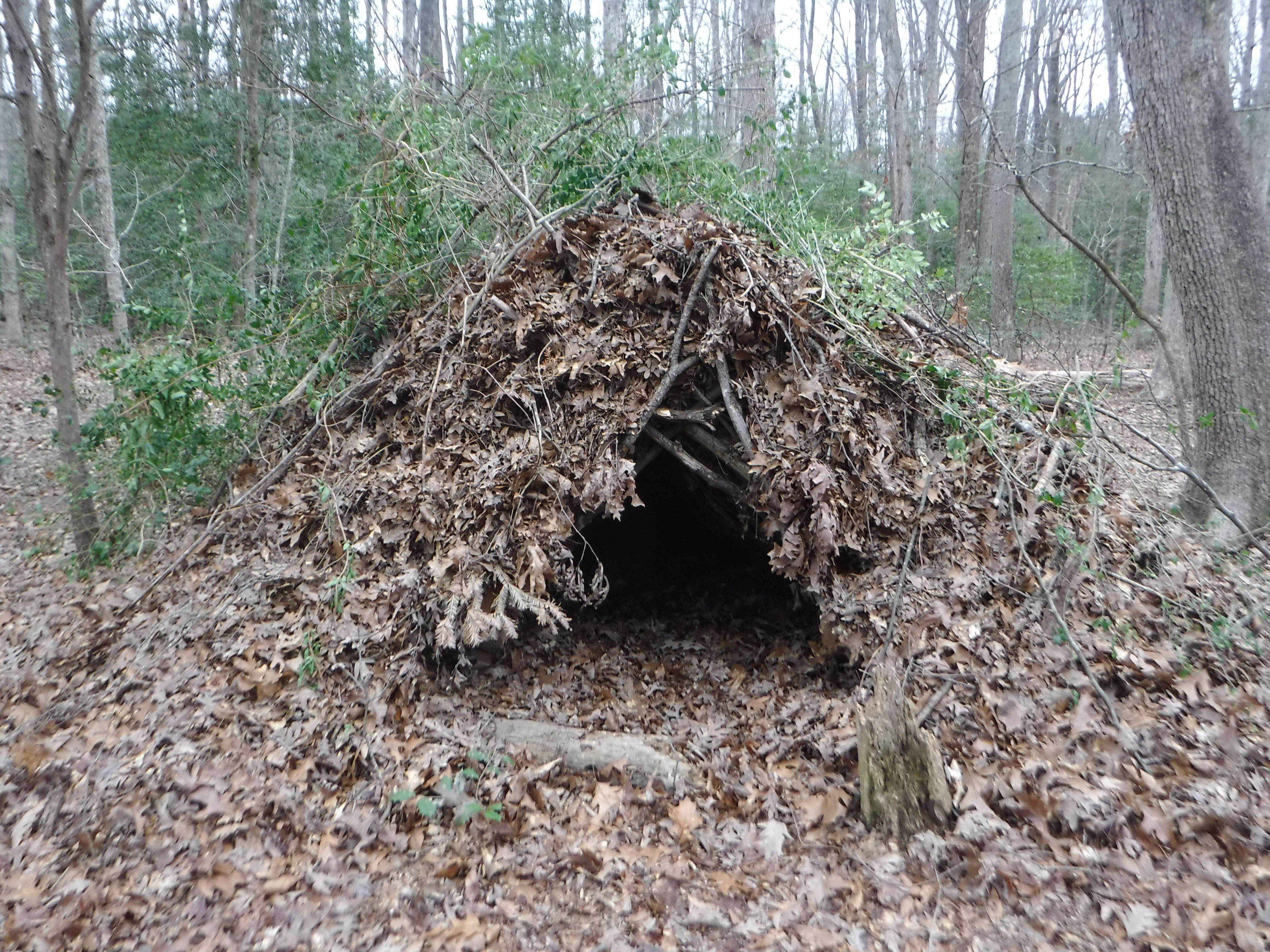 Build a Debris Hut
